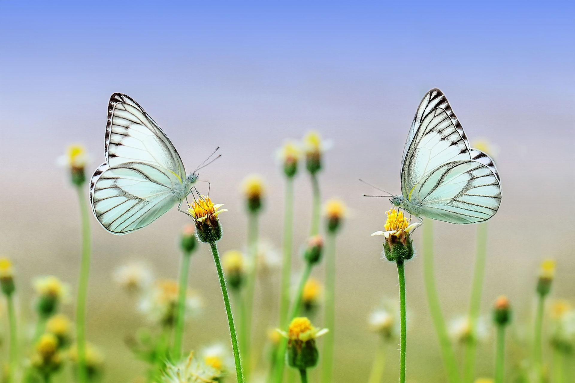 Schmetterlinge-Paarseminare-Web
